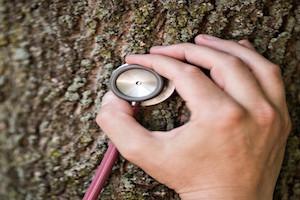 Tupelo MS Tree Doctor
