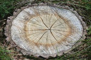 stump grinding tupelo ms