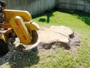 tupelo stump removal