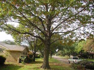 tupelo tree companies ms