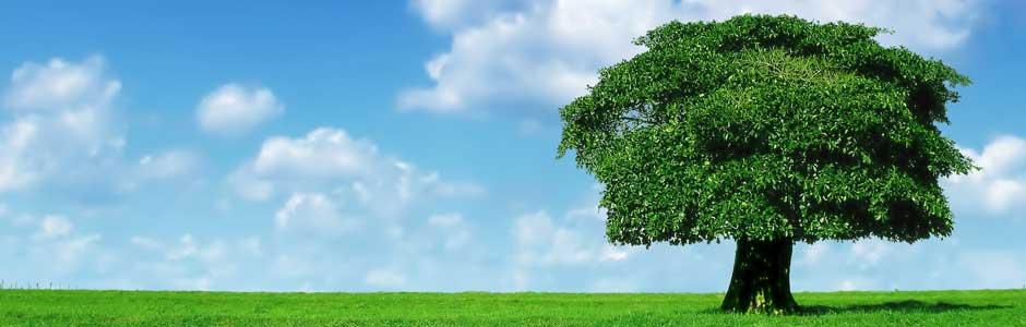 tupelo tree doctor surgeon