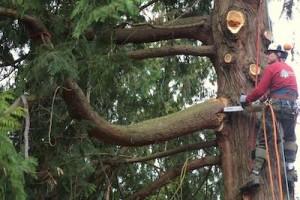 tupelo tree trimming services
