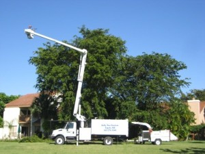 tupelo tree trimming truck